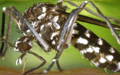De beste middelen tegen muggenbeten